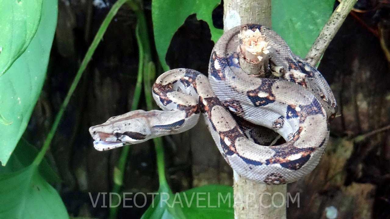 Motylarnia w Jaco na Kostaryce