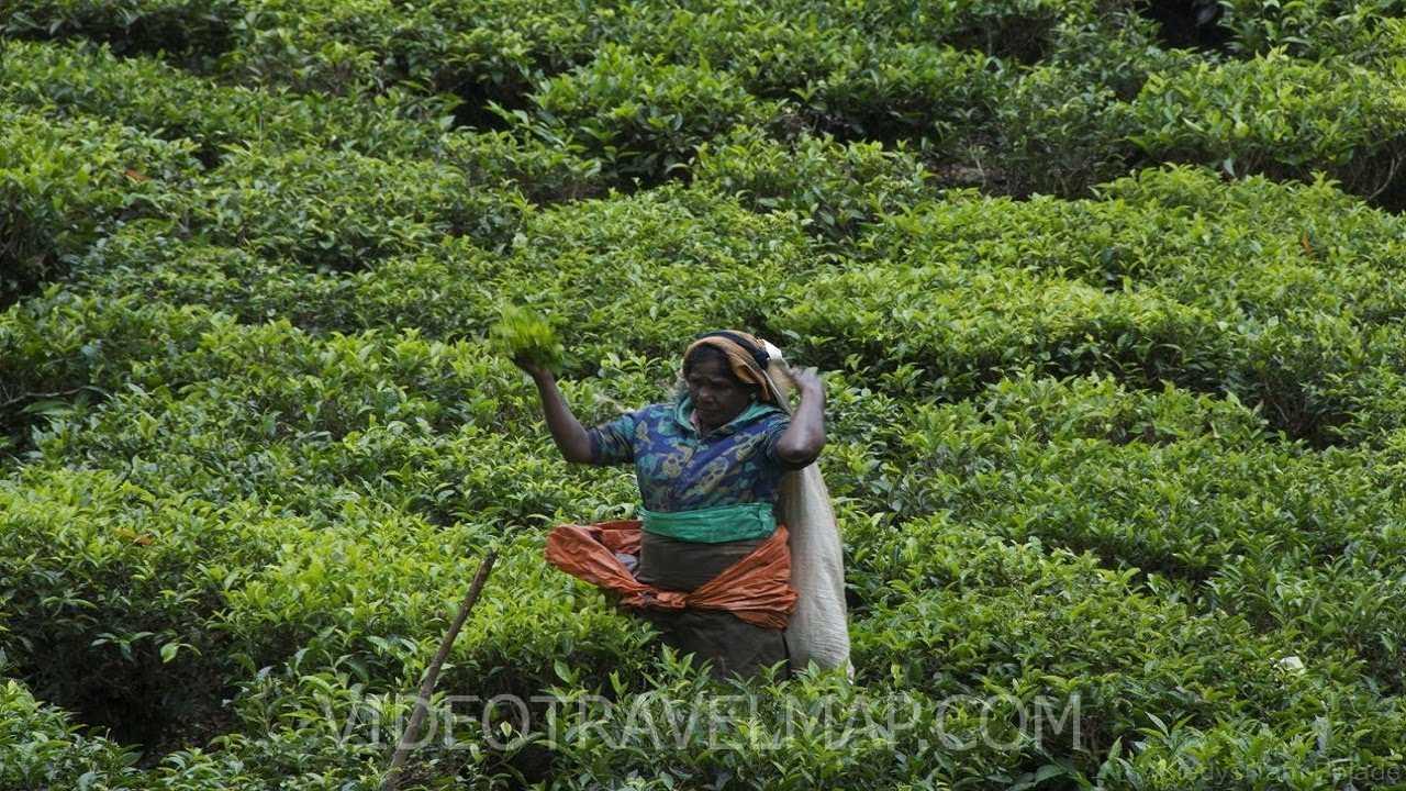 Kilka ciekawych roślin ze Sri Lanki