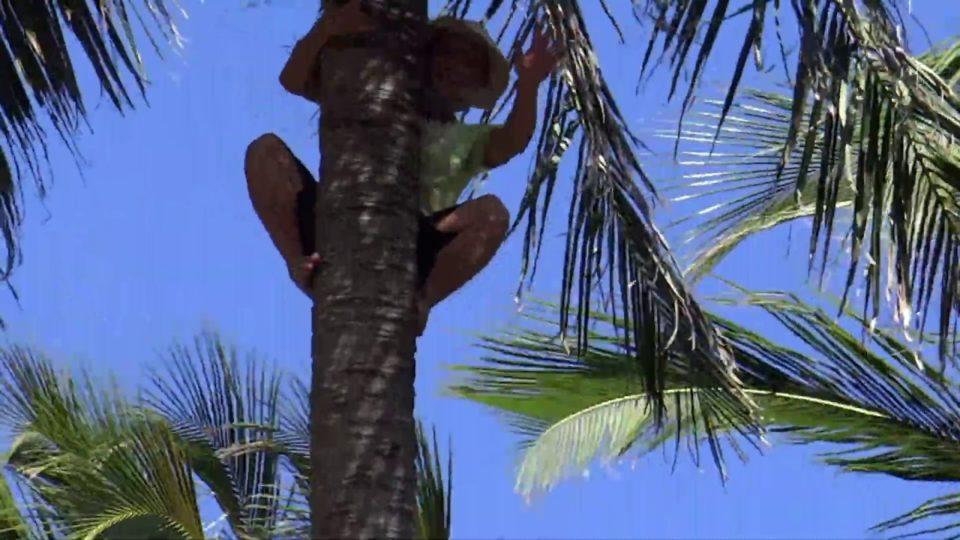 Wietnamczyk na drzewie